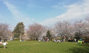 誉田さくら公園でお花見